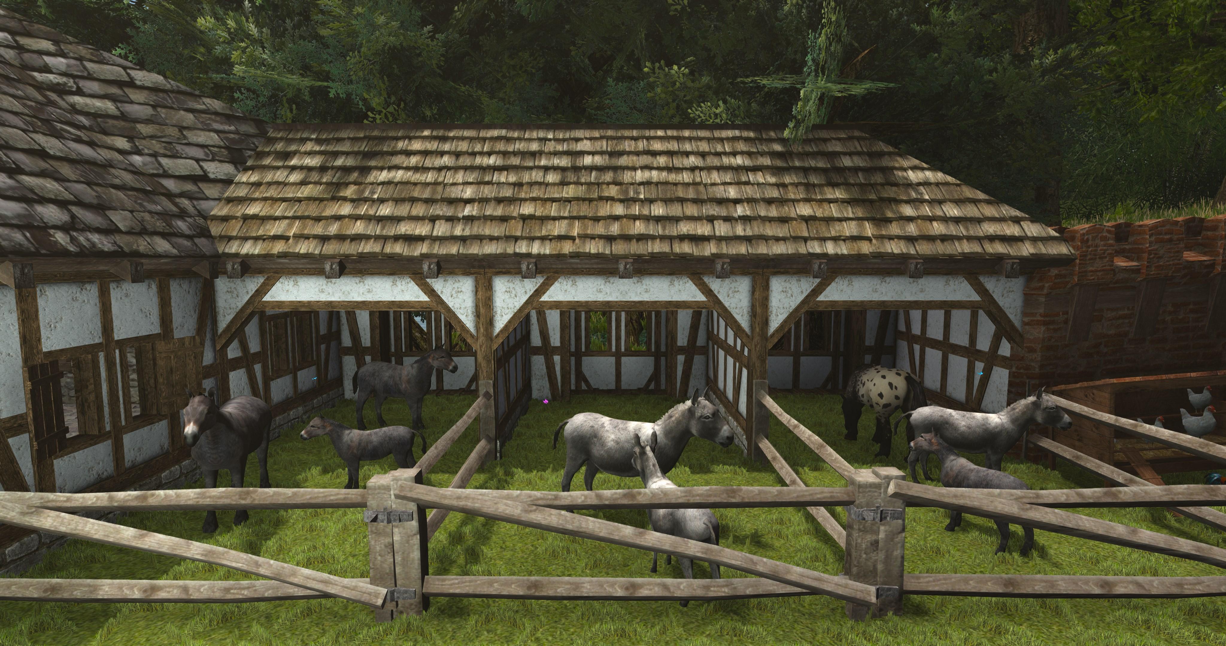 donkeys_mules